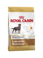 Labrador Retriever Sterilised